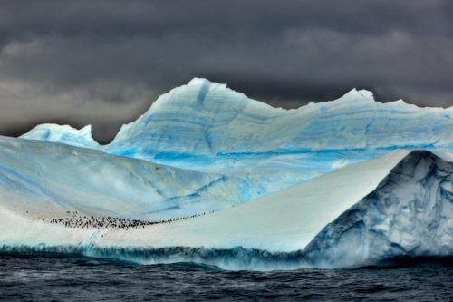 Pinguine auf einem Eisberg