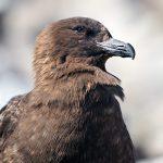 Vögel in Antarctica