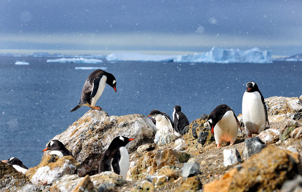Antarctic Peninsula, Brown Bluff