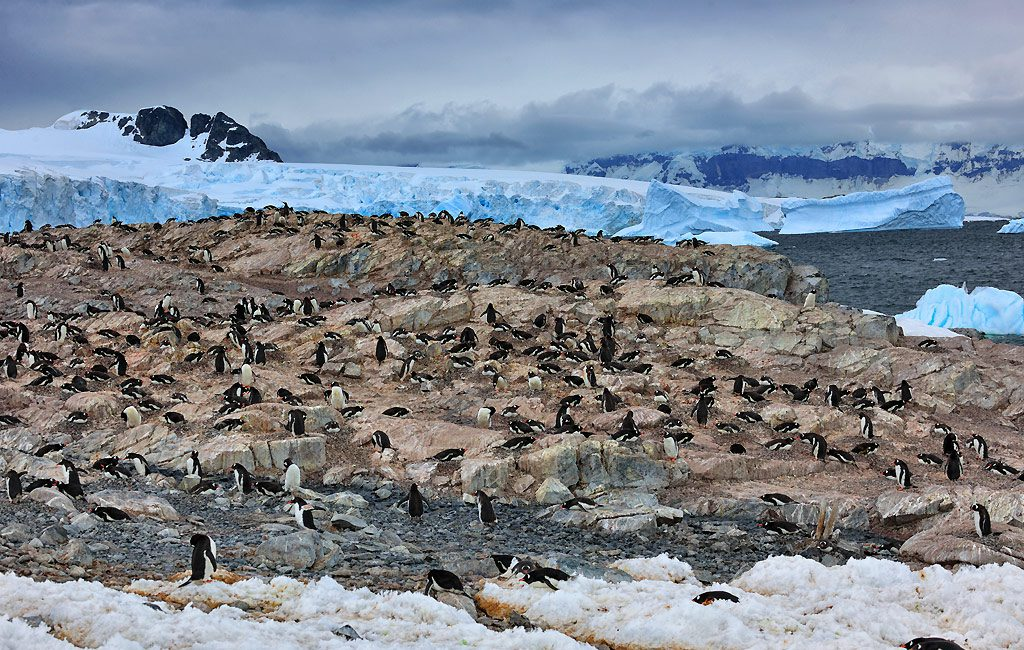 Antarctic Peninsula, Orne Harbour