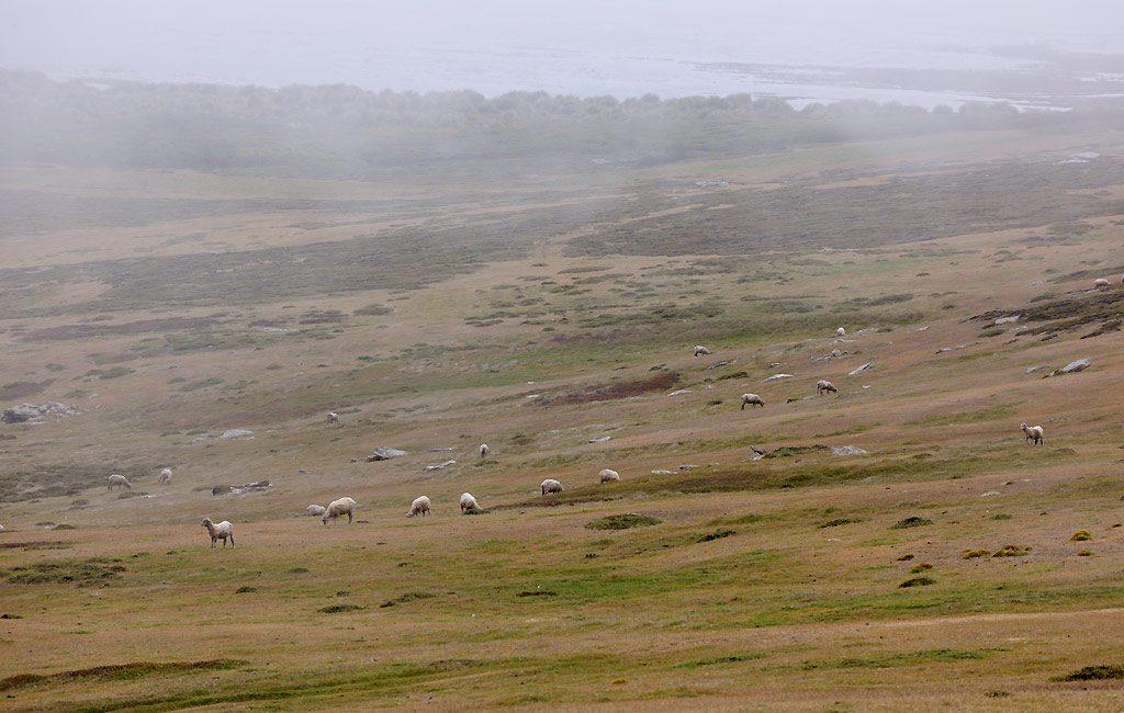 Falkland, Westpoint