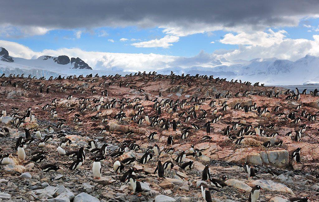 Antarctic Peninsula, Cuverville Island